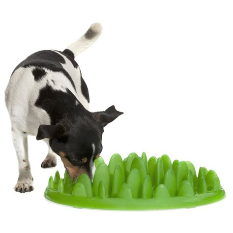 Green Feeder For Dogs green by northmate tuft of grass pet feeder slows the green