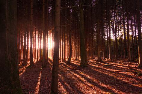 kostenlose foto baum natur wald ast licht stra 223 e sonnenlicht blatt blume gr 252 n kurve kostenlose foto landschaft baum natur wald ast licht sonne nacht sonnenlicht morgen