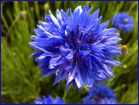 nomi di fiori dalla a alla z forever wedding planner il significato dei fiori dalla a