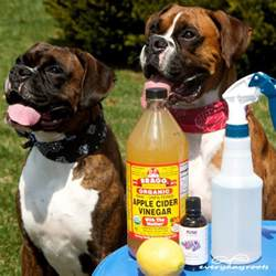 home remedy for fleas on dogs ways to prevent and get rid of fleas
