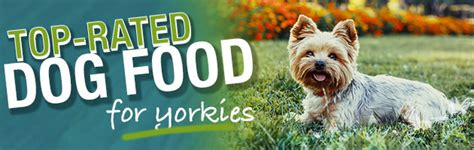 best puppy food for yorkies what is the best food for a yorkie