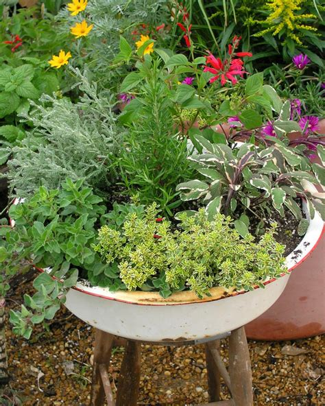 herb garden plants how to use herbs in the landscape hgtv