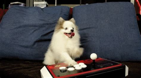 puppy arcade gif find on giphy