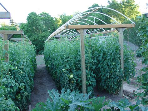 Trellis Gardening Ideas Here Is A Great Way To Grow A Lot Of Tomatoes In A Small Area Provisionsfarms Interesting Way