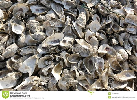 Oyster Shell L by Oyster Shell Royalty Free Stock Images Image 20739409