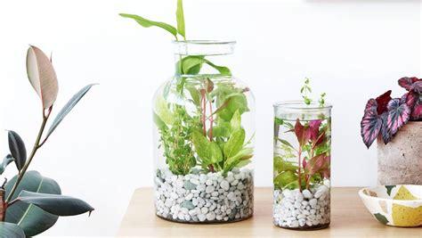 aquatic terrarium stuffconz