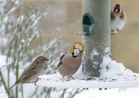 winter bird feeders 09 flickr photo sharing