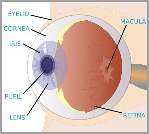 diagram of eye for the eye diagram for diagram and