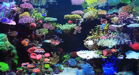 Marine Aquarium Aquascaping by Real Reef Aquascaping With Youngil Moon