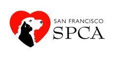sf spca san francisco spca ask a vet provides weekly expert pet