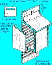Plans For Building A Bat House Bat House Designs On Bats Bat House Plans And Brown