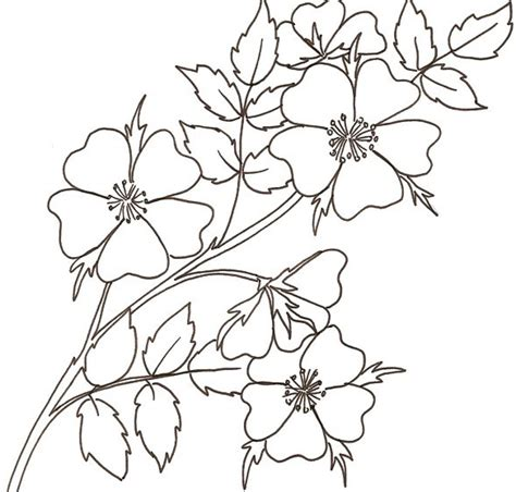 fiori da colorare e stare disegno di rose selvatiche cose per crescere