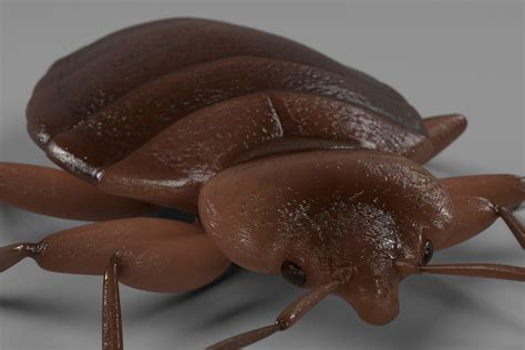 bed bugs detection treatment for bed bugs in healthcare facilities debugged