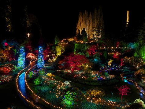christmas lights at butchart gardens victoria bc even a