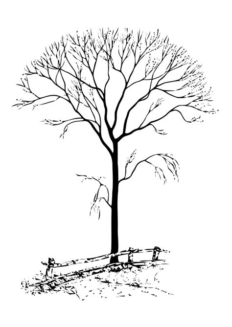 tree without leaves coloring page free printable tree coloring pages for kids