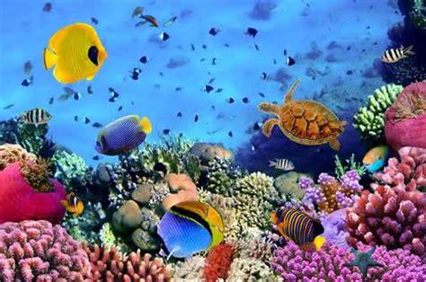 imagenes de paisajes acuaticos definici 243 n de ecosistema acu 225 tico qu 233 es y concepto