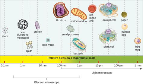 Baterai Best One All Type 1 3 types of microorganisms biology libretexts