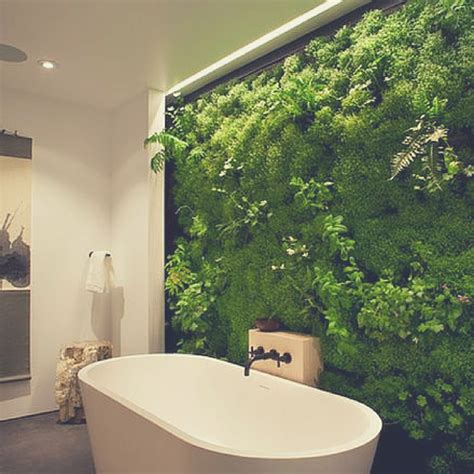 bamboo plant in bathroom bloompop best flowers plants for the bathroom the