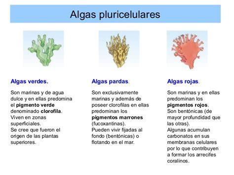 imagenes de algas pardas verdes y rojas diversidad y clasificaci 243 n de los seres vivos