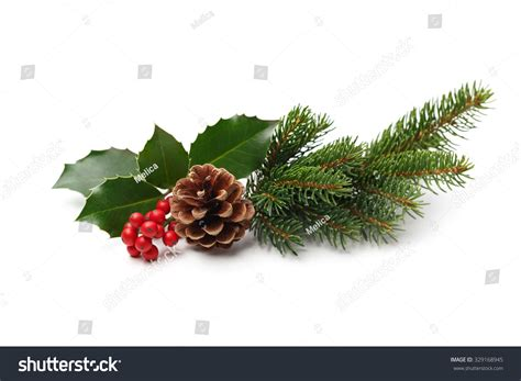 4 ft cone berry snow tip tree best 28 pine cones and berries stock background branch of tree with