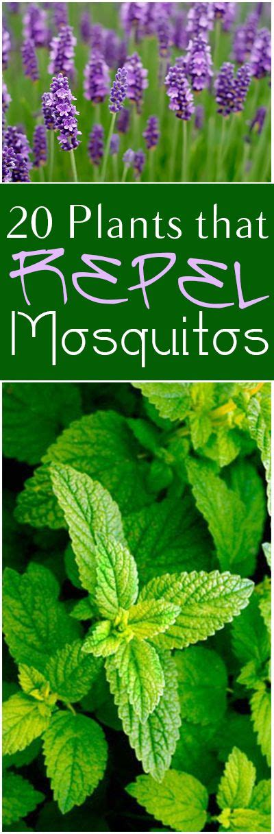 what plants keep mosquitoes away 20 plants that repel mosquitoes great plants and flowers