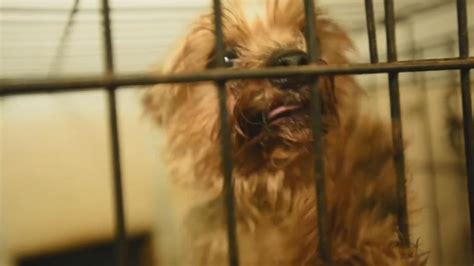 list of puppy mills in ohio 12 ohio puppy mills on humane society s list of the