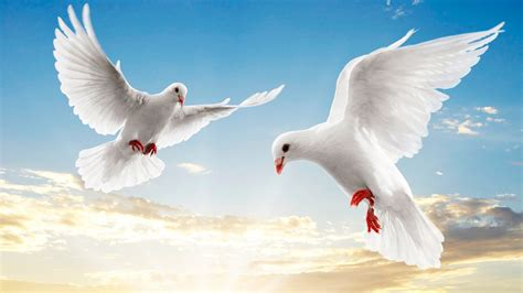 seeing a white dove in a dream is it always good dreameo