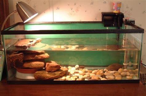 aquarium design for turtles caring for pet turtles in tanks quot how to quot setup recetas