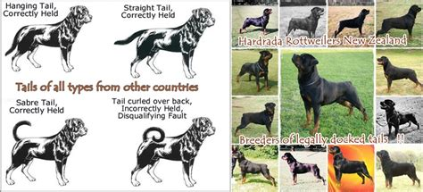 why are dogs tails docked www rottweiler co nz