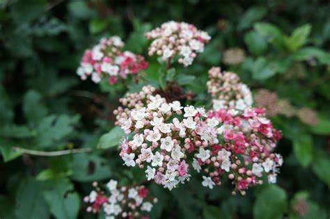 shrubs that flower in winter foragefor news winter flowering shrubs
