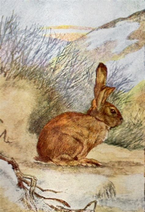 bumble button darling victorian rabbits  bunnies
