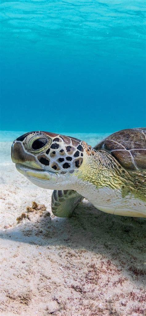 wallpaper turtle underwater sea  uhd  picture