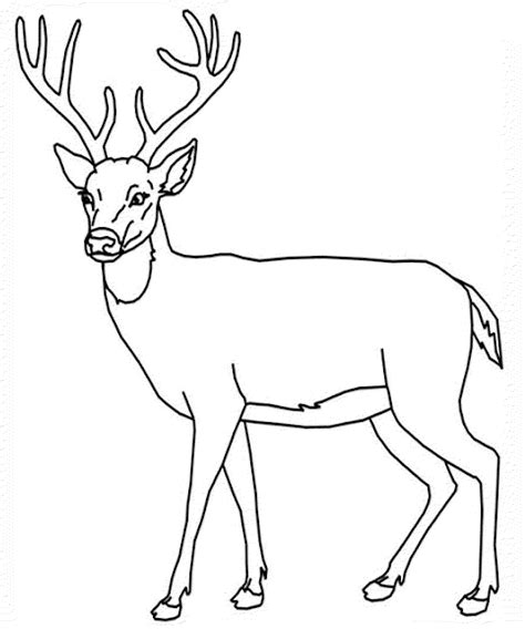 coloring page deer white tailed deer coloring pages to print coloring home