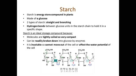 carbohydrates a level as biology unit 2 revision aqa carbohydrates starch