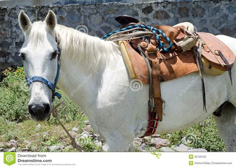 sella accedi cavallo bianco con la sella messicana fotografia stock