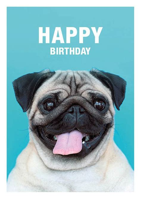Pug Birthday Meme - pin by ashley mccollum on pugs pinterest dog pug
