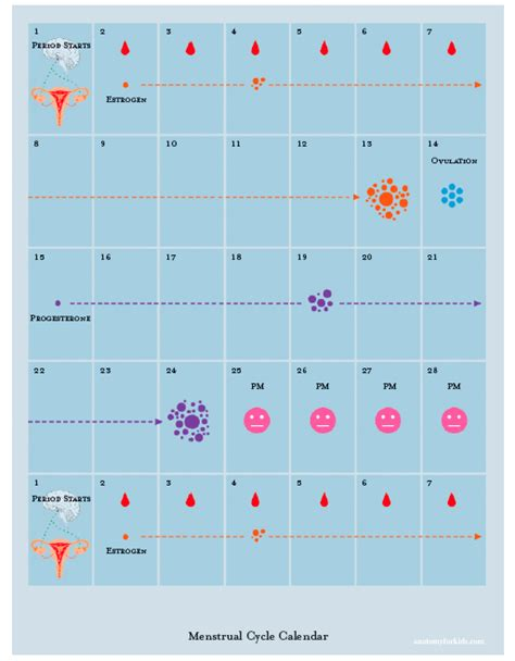 Menstruation Calendar Menstrual Cycle Calendar Gse Bookbinder Co
