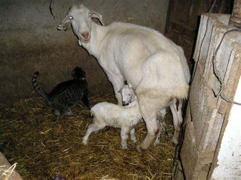 la madre del cordero 8408170430 la madre del cordero arcos de las salinas