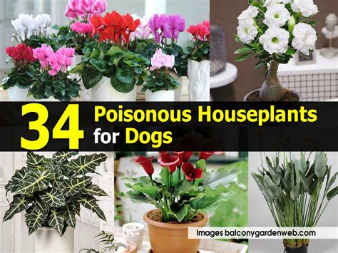 safe house plants for dogs 34 poisonous houseplants for dogs
