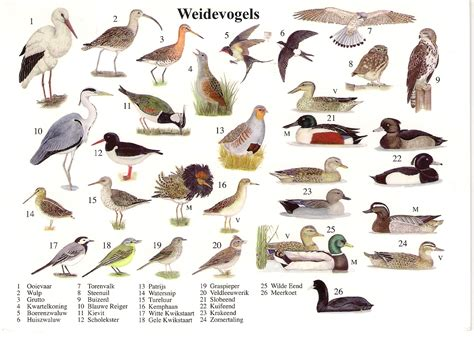 cafechoo image list of bird names