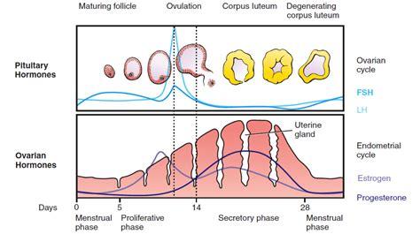 test prima ciclo stimolazione ormonale icsi roma