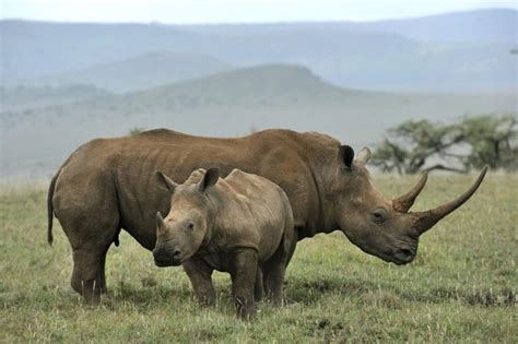 wild animals of the wild animals to decline by two thirds by 2020 new report finds ny daily news