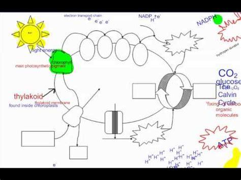 Biology Plus Mba photosynthesis part 1 intro ib biology