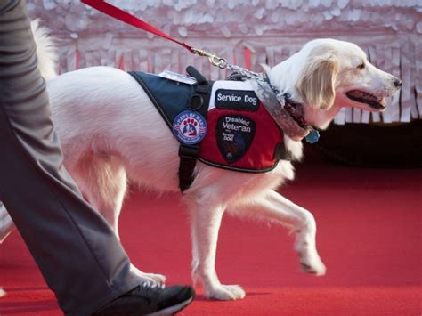 emotional service the benefits of service animals and emotional support animals sovereign health