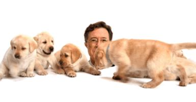 stephen colbert puppies jimmy and puppies gifs find on giphy