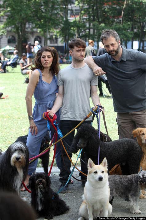 daniel radcliffe dogs daniel radcliffe walks like a bajillion dogs on trainwreck set huffpost