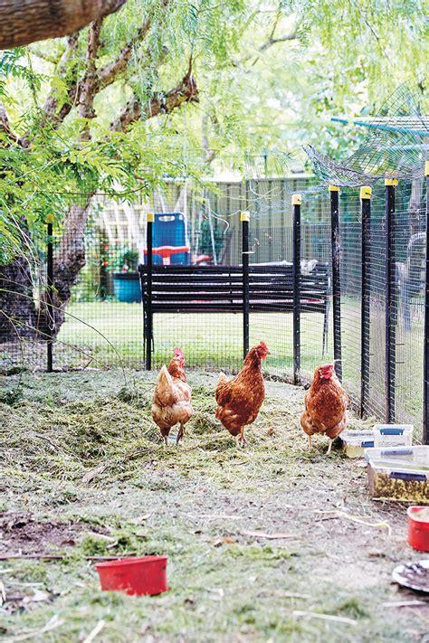 backyard chickens dave ingham 9781743367537 murdoch
