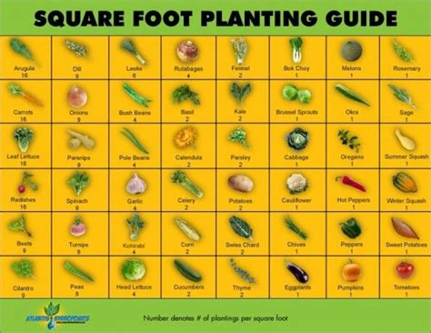refinery layout guidelines square foot garden plant spacing guidelines gardening