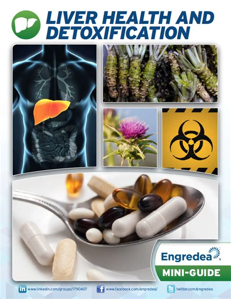 Clark Detox 360 Manual by Liver Health And Detoxification 2016 New Network