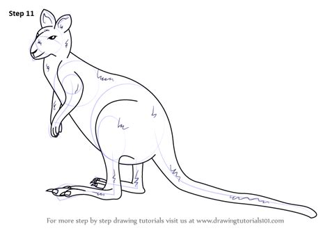 wallaby tutorial step by step how to draw an agile wallaby
